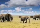 تصاویر و ویدیو های آموزشی: فصل سفری در دنیای جانداران