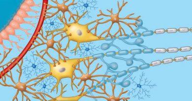 تصاویر و ویدیو های آموزشی: فصل دستگاه عصبی