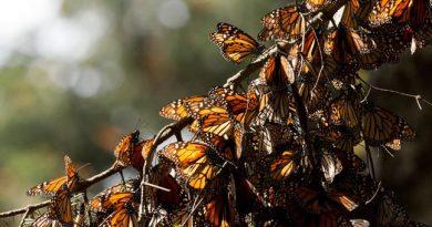 یادداشت های زیستی: فصل زیست شناسی دیروز، امروز و فردا