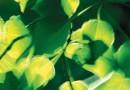 تصاویر و ویدیو های آموزشی: فصل شارش انرژی در جانداران